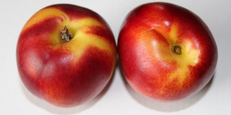 Can Dogs Eat Nectarines?