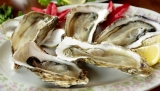 Can Dogs Eat Oysters?