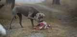 Can Dogs Eat Raw Meat?