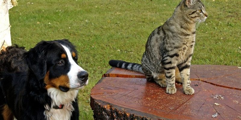 Can Dogs and Cats Mate?