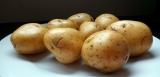 Can Guinea Pigs Eat Potatoes?