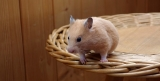Can Hamsters Eat Pumpkin Seeds?