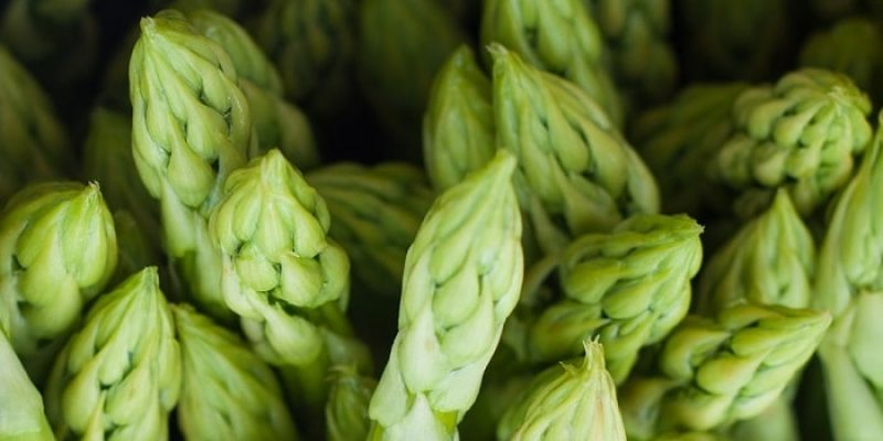 Can Rabbits Eat Asparagus?