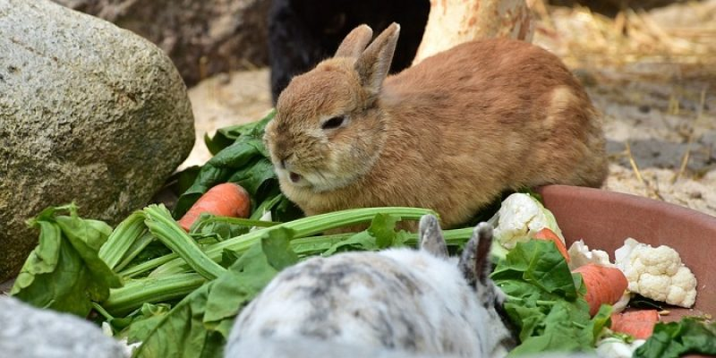 Can Rabbits Eat Beetroot Leaves?