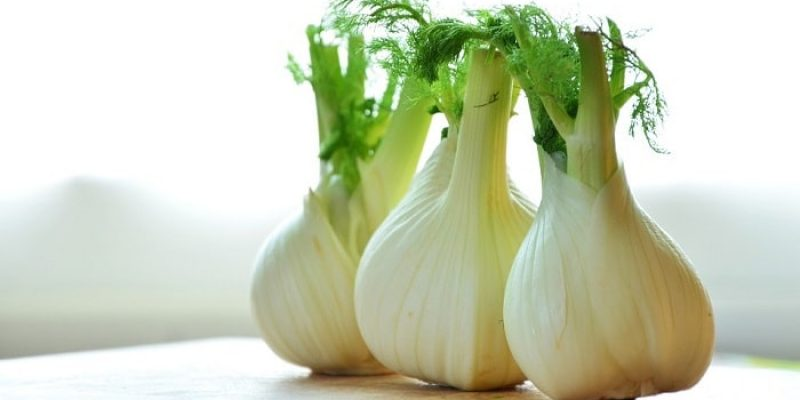 Can Rabbits Eat Fennel?
