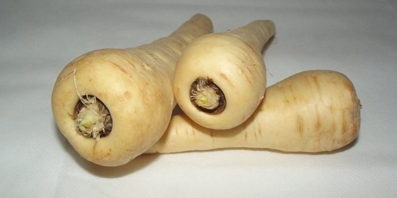 Can Rabbits Eat Parsnips?