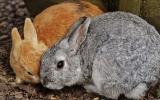 Can Rabbits Eat Pumpkin?