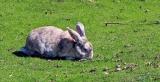 Can Rabbits Eat Rosemary?