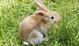 Can Rabbits Eat Runner Beans?