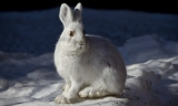 Can Rabbits See In The Dark?