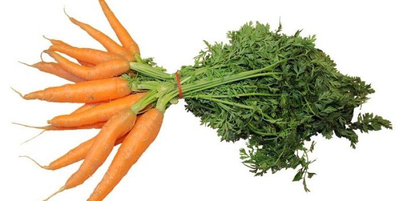 Can Rats Eat Carrots?