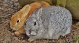 Can Rabbits Eat Peanuts?