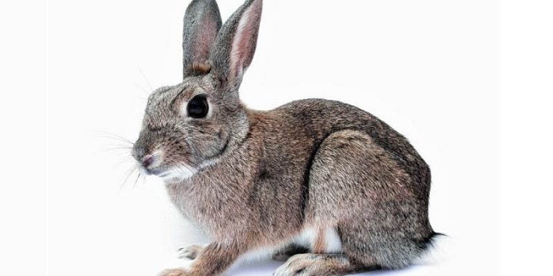 How to Bathe and Clean a Rabbit?