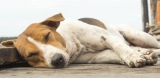 Why Is My Dog Twitching While Sleeping?